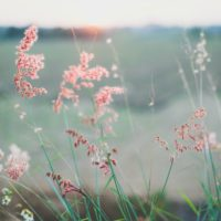 Folk Music Spotlight – the Sad & the Sweet
